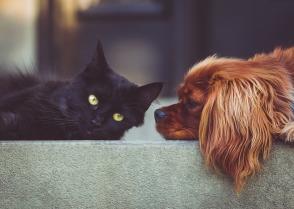 blog cat dog